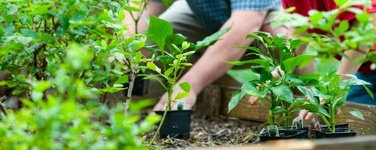 offre-jardinage-entreprise