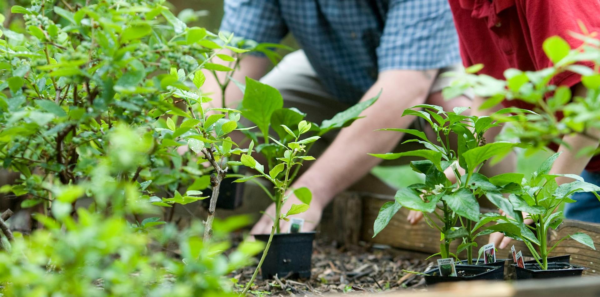 services-entreprise-jardinage